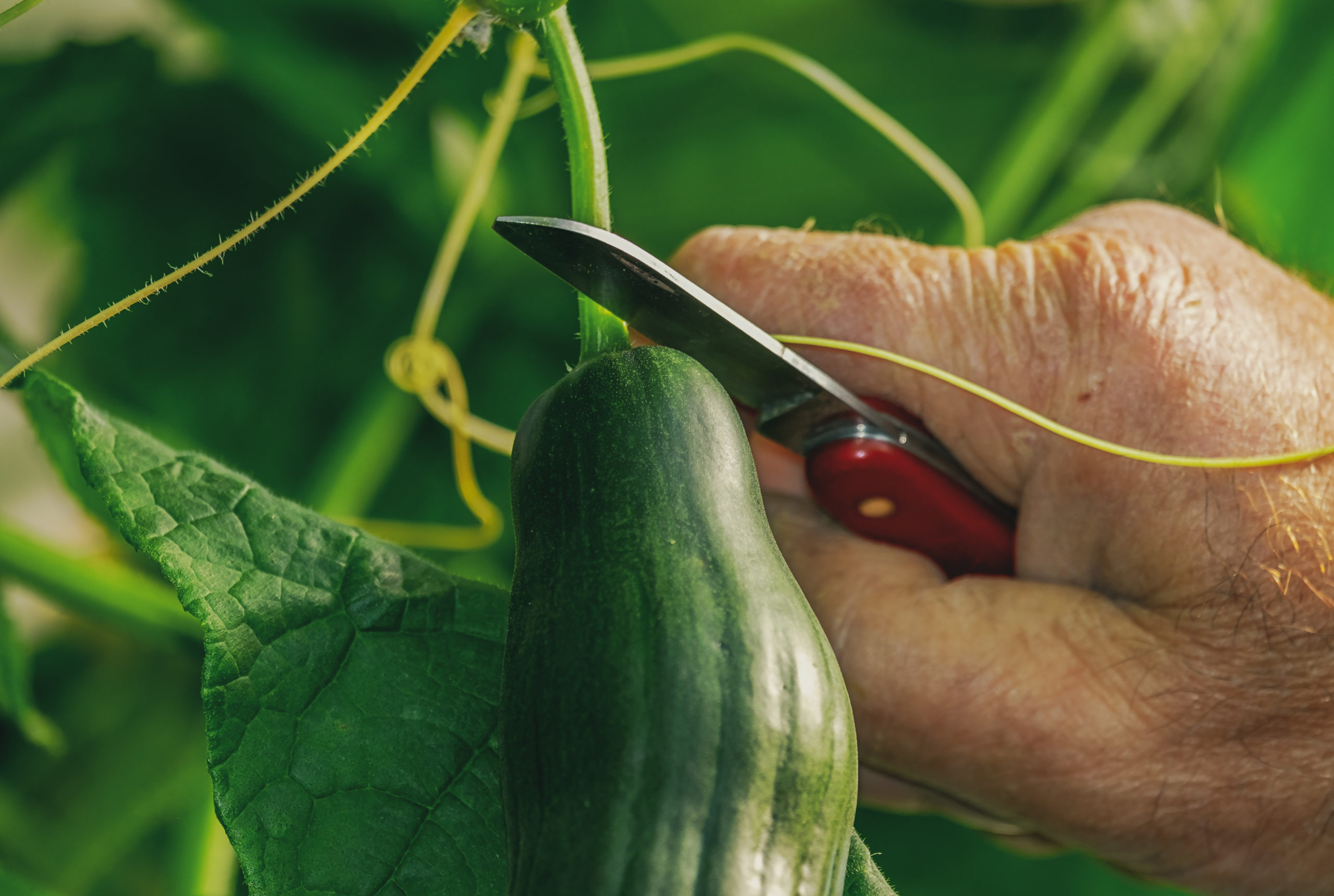 7 Impossible to kill fruits and veggies for the beginning homesteader!