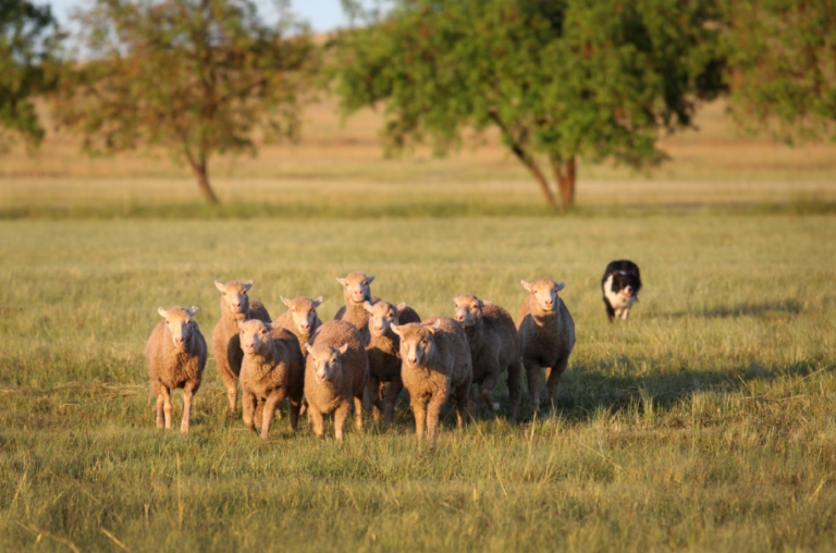 The Guide To Farm Dogs