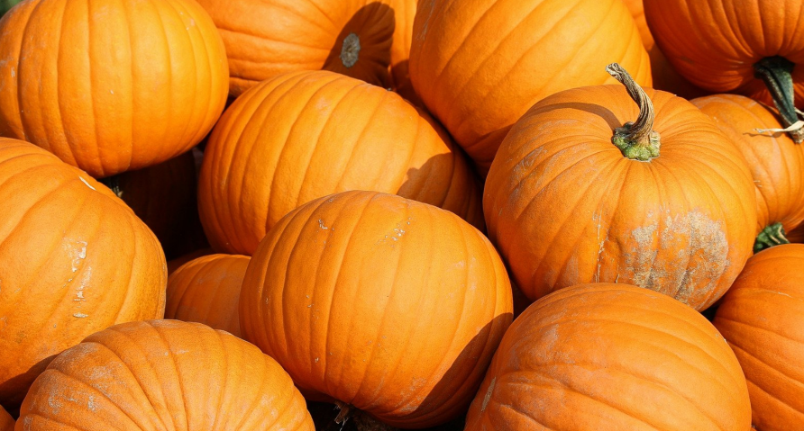 Creative Ways To Grow Pumpkins In Small Spaces