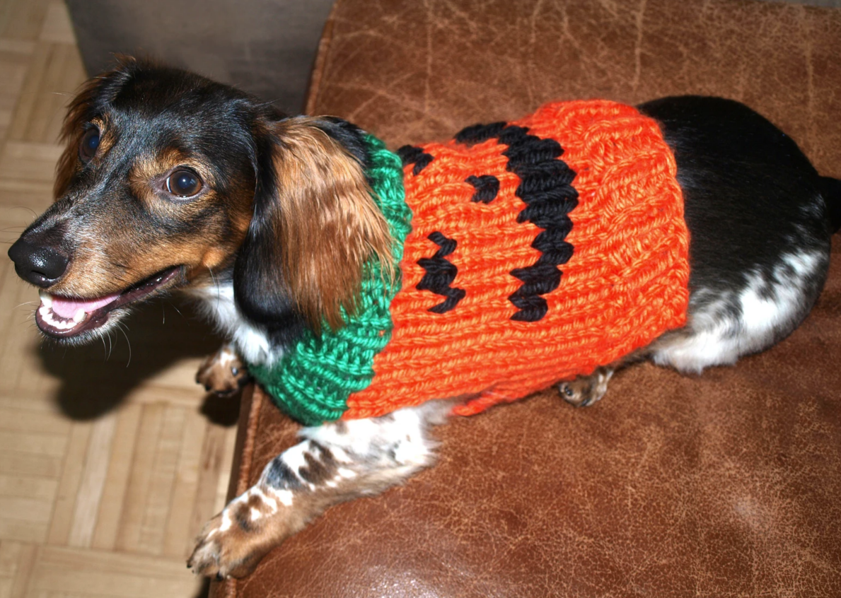 10 Free Easy Knit Dog Sweater Patterns